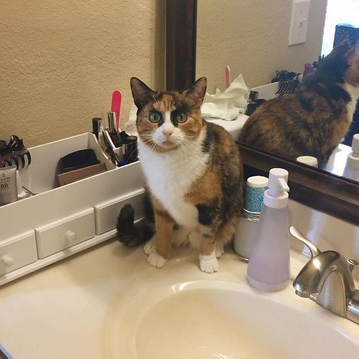 gato-con-cejas-7
