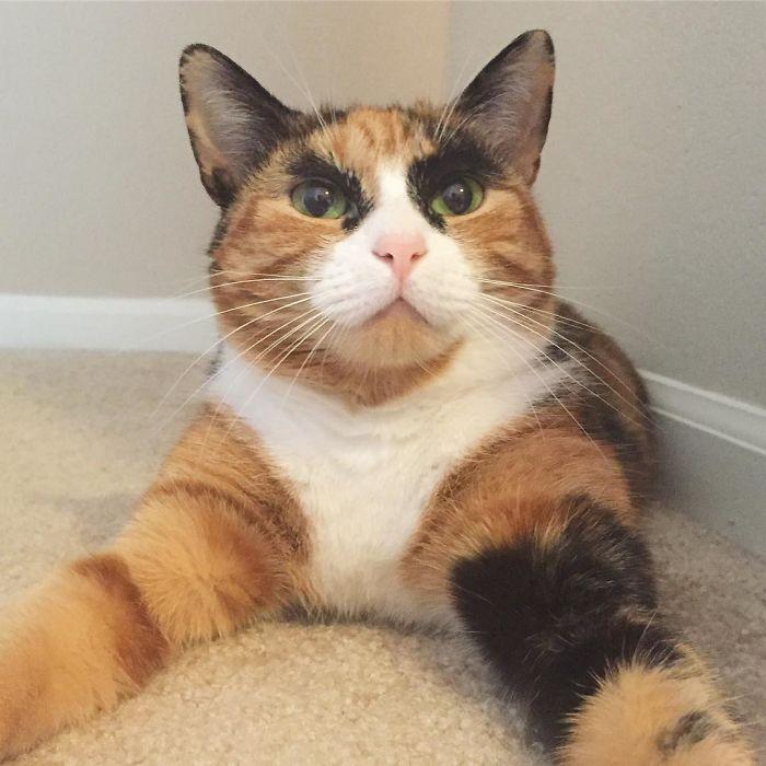gato-con-cejas-8