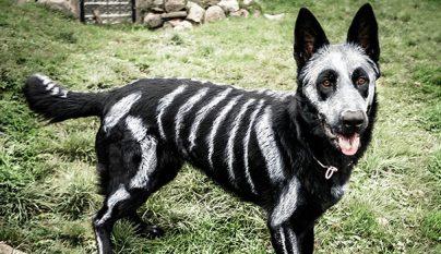 perro-preparado-para-halloween