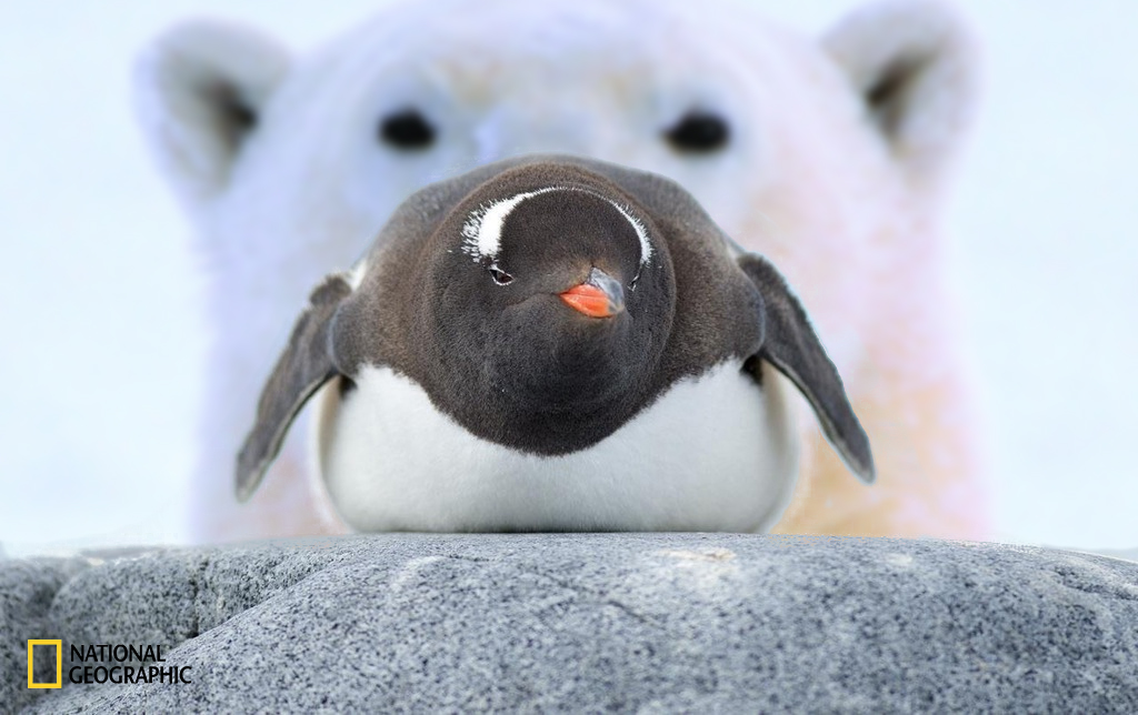 pinguino-6