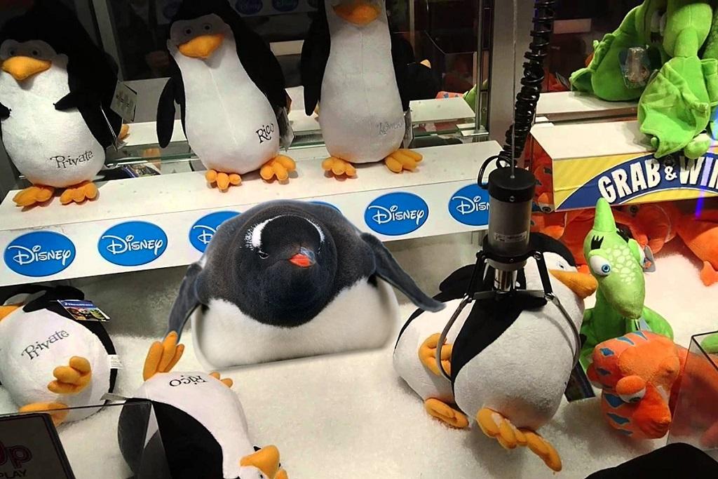 pinguino-7