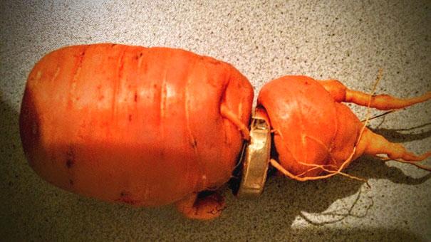 anillo-boda-zanahoria-1