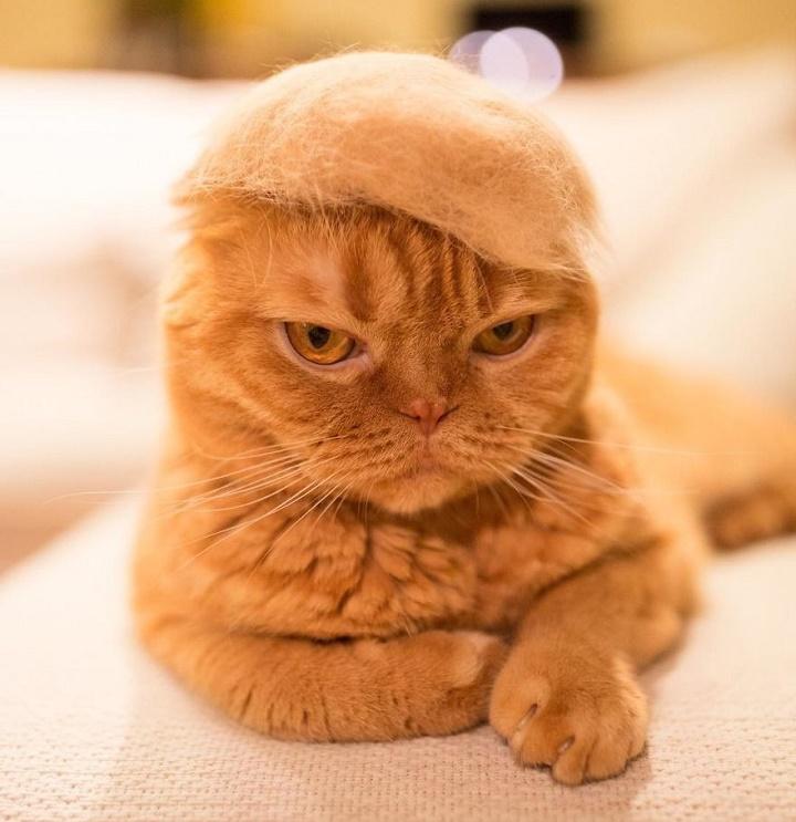 el-gato-de-donald-trump