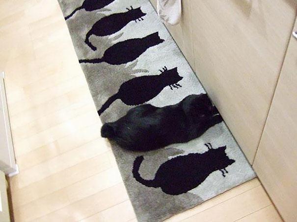 gato-camuflaje-2