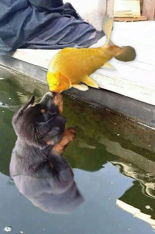 perro-pez-photoshop-10