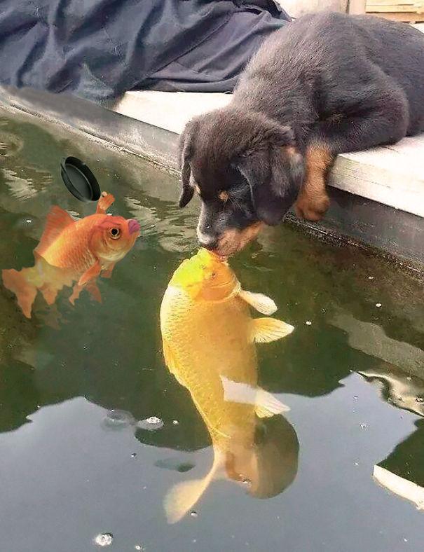 perro-pez-photoshop-11