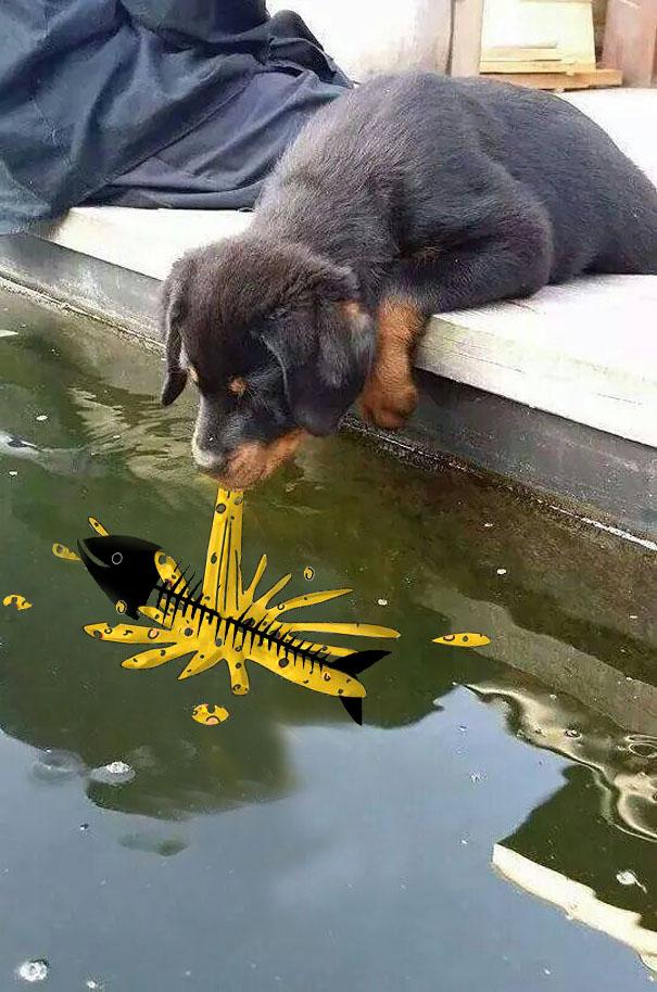 perro-pez-photoshop-16