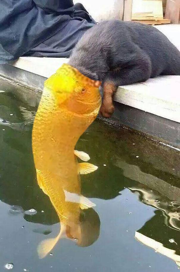 perro-pez-photoshop-2