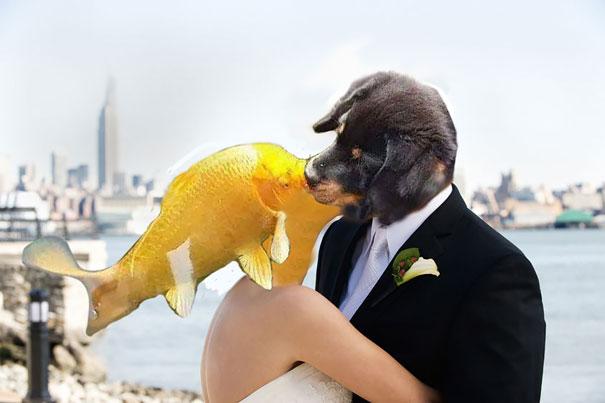 perro-pez-photoshop-9