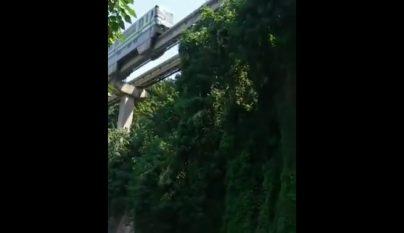 tren-puente