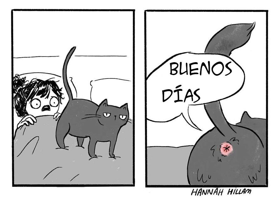 Juegos de Gatos - MiniJuegoscom