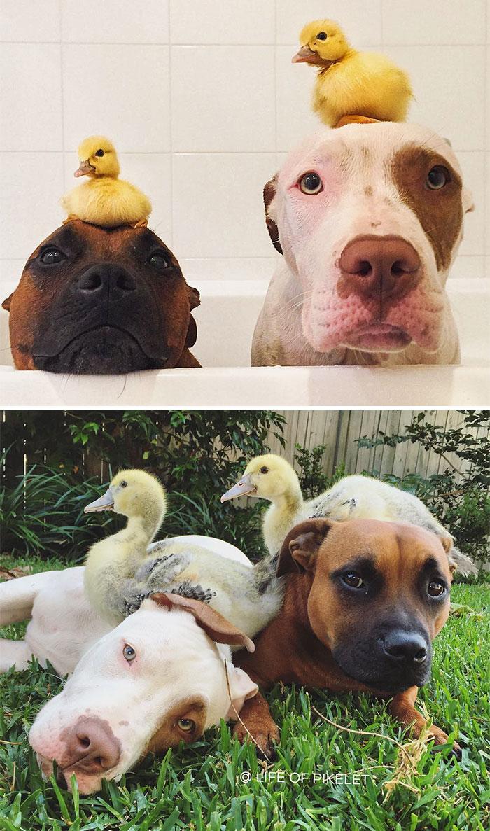 animales-que-han-crecido-juntos