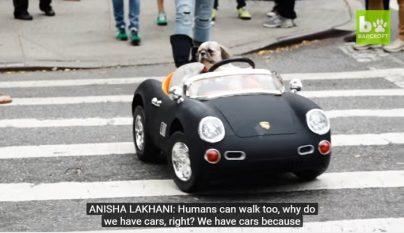 perro-coches