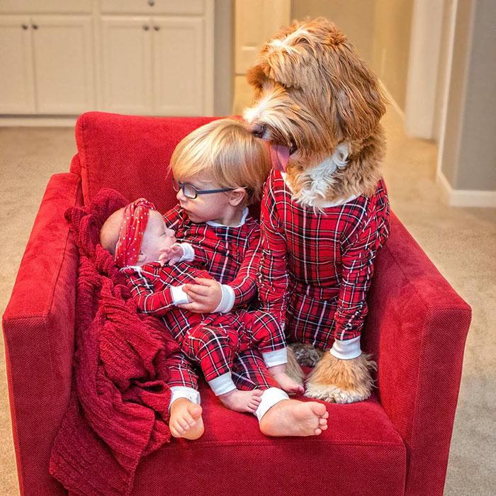 perro-nino-12