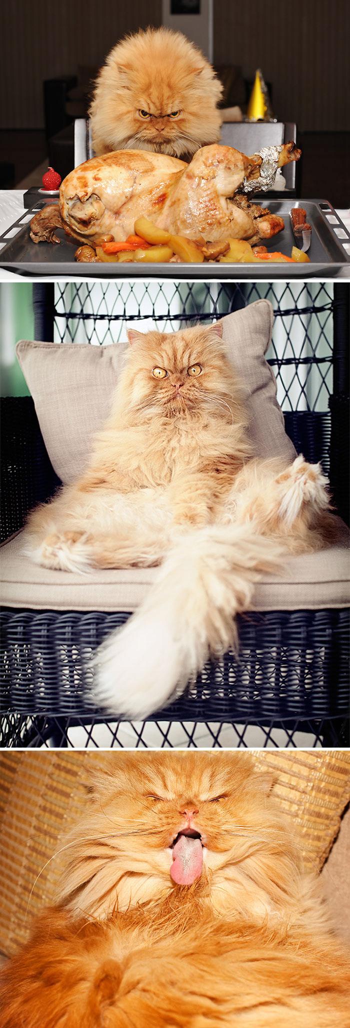 gato-enfadado