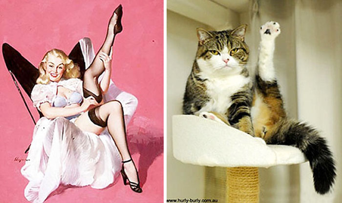 gatos-pin-up