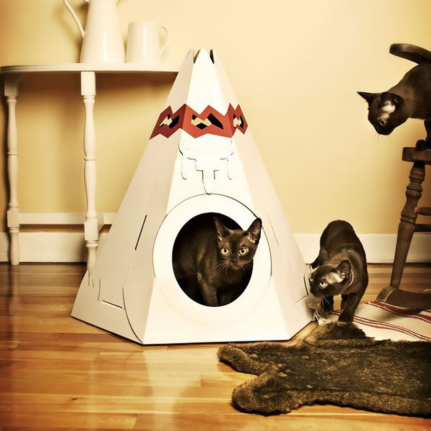 tipi-indio-gatos