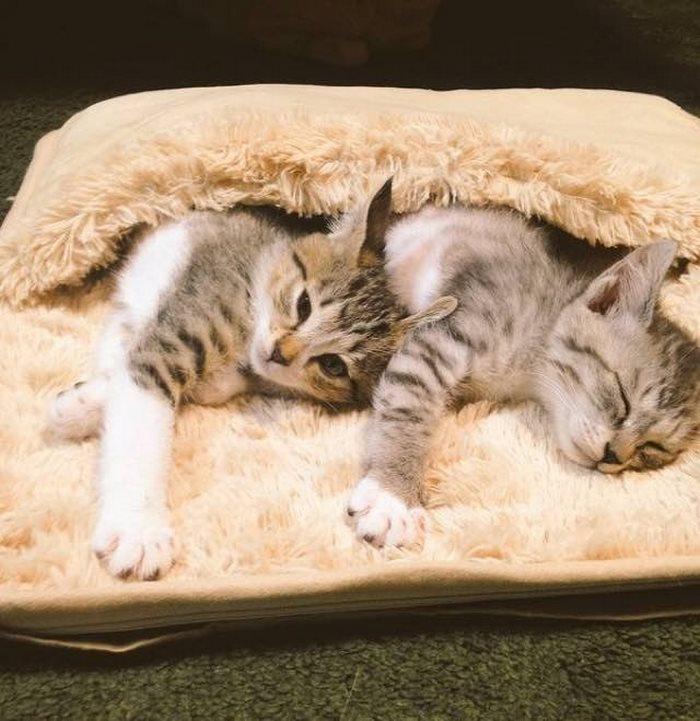 gatos-calentitos