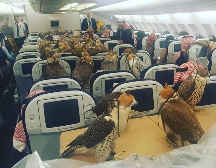 halcones-avion