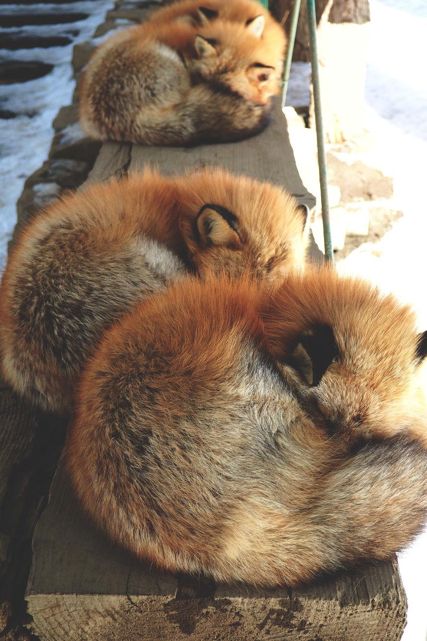 pueblo-zorros