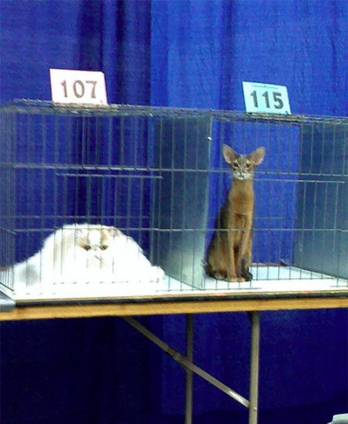 animales-espachurrados