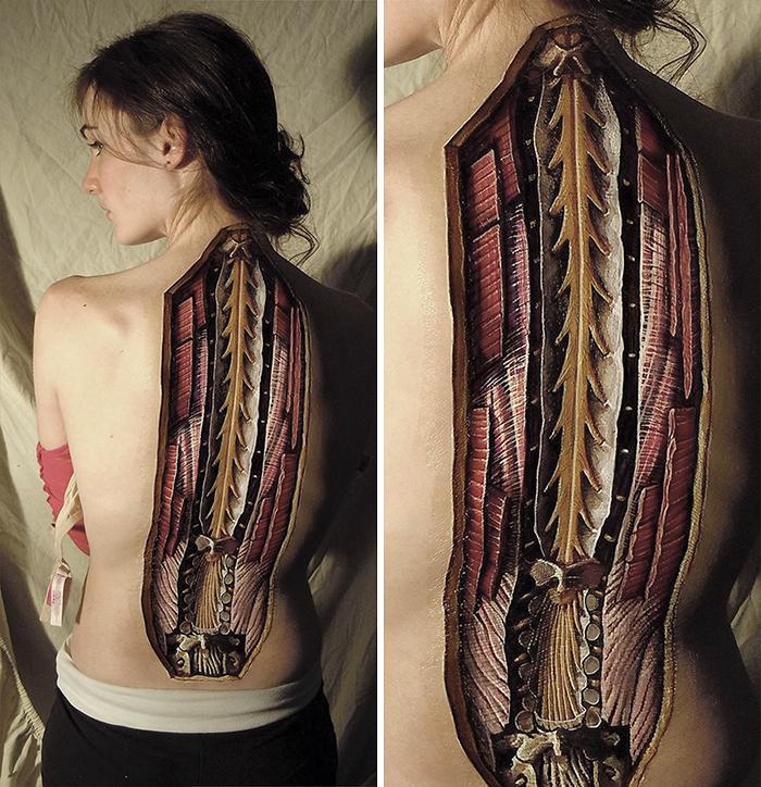dibujos-anatomia