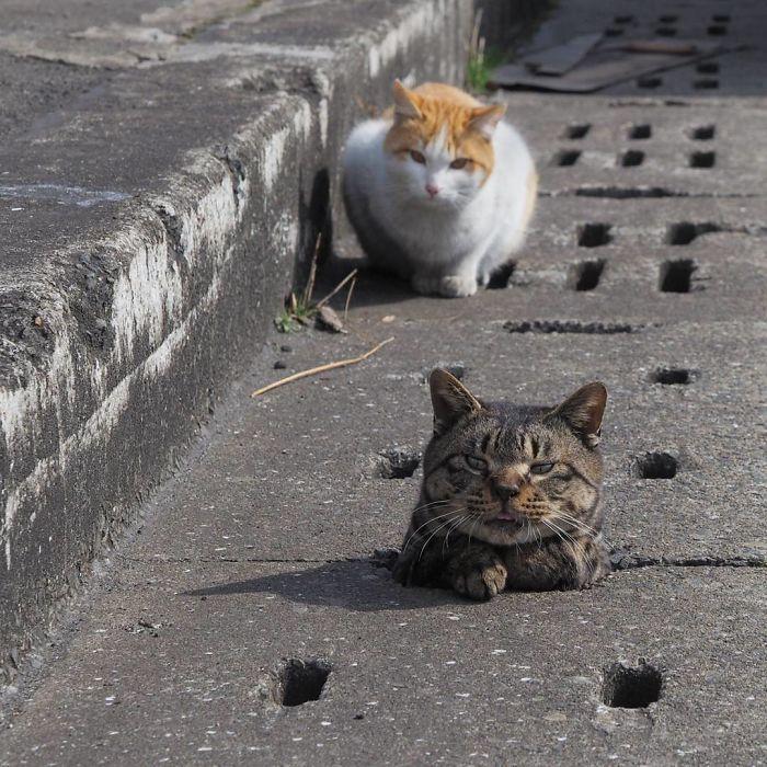gatos-callejeros