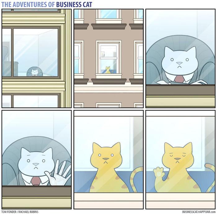 jefe-gato