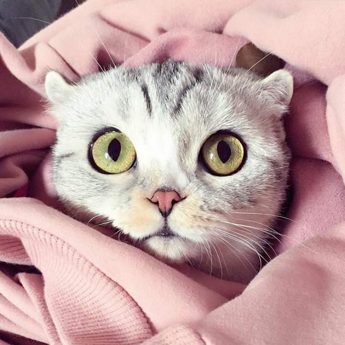 Hana-gato