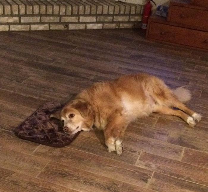 cama-perro