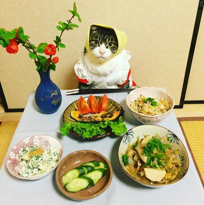 gato-chef