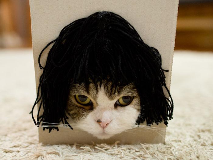 gato-peluquines