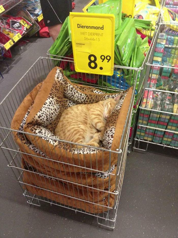 gato-que-ya-sabe-lo-que-quiere