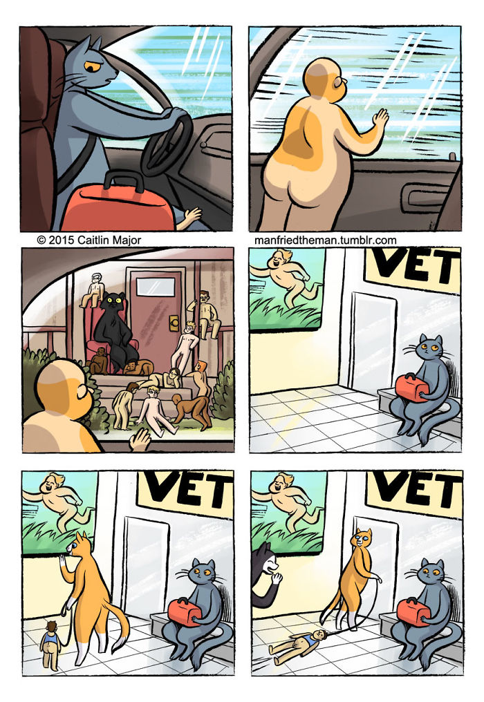 gatos-humanos