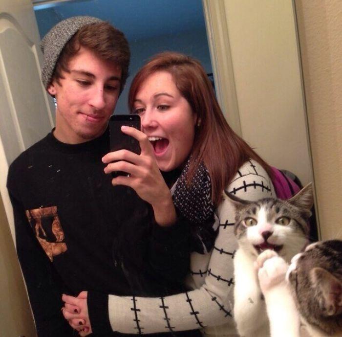 gatos-troleando-fotos