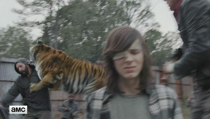 tigre-The-Walking-Dead