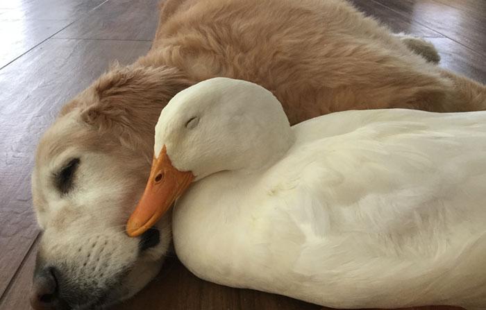 amistad-perro-y-gato