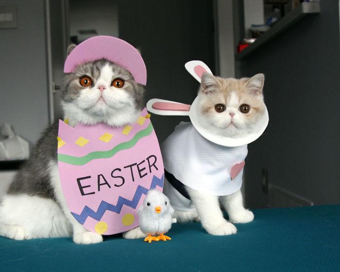disfraces-para-gatos