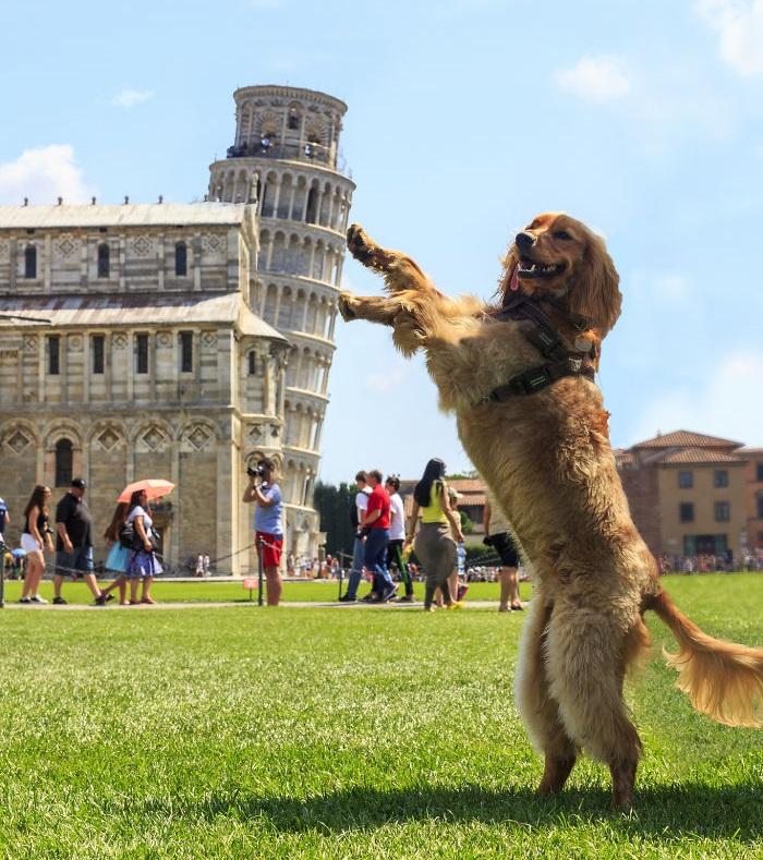 perro-aguantando-la-Torre-de-Pisa