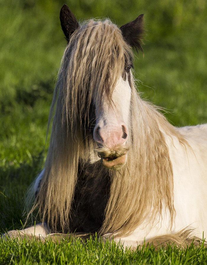caballos-bigote