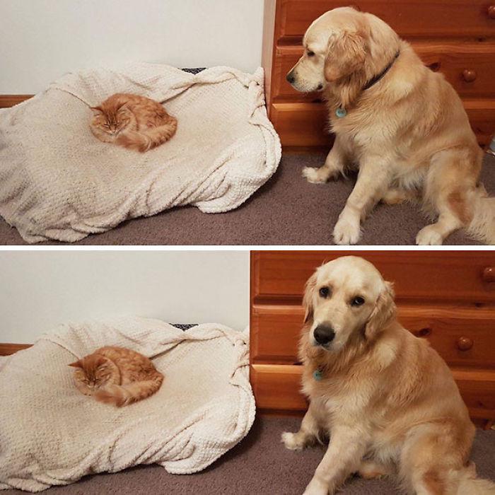 gato-cama-perro
