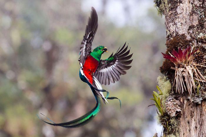mejores-fotos-fauna
