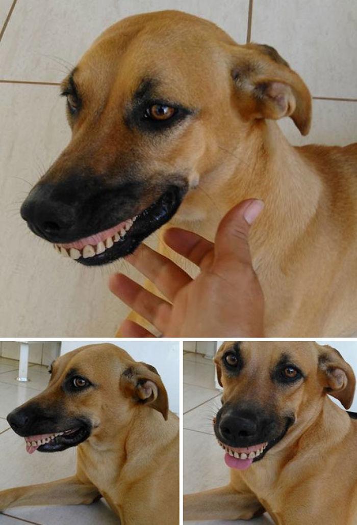 perro-con-dentadura-postiza