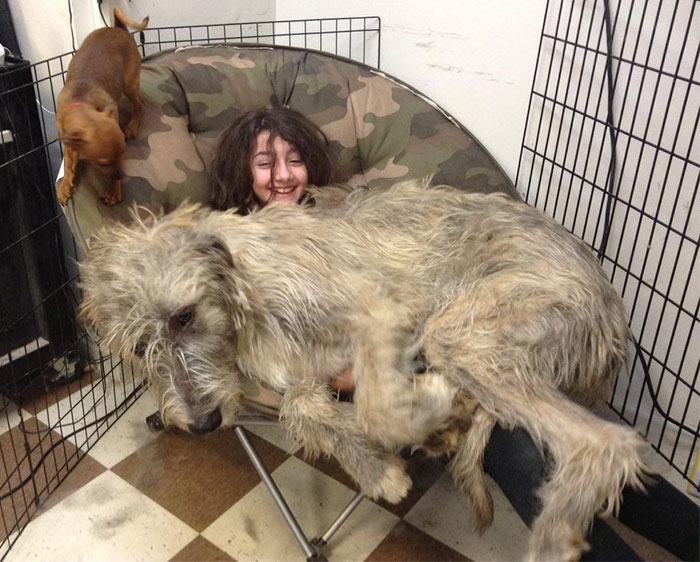 perro-enorme