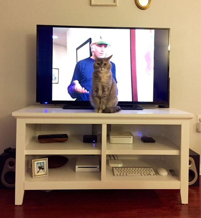 gato-protagonista
