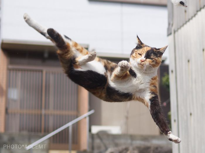 gatos-artes-marciales