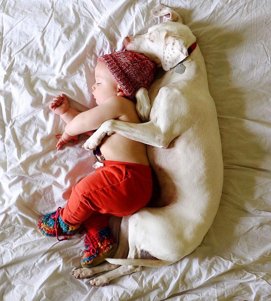 perro-bebe