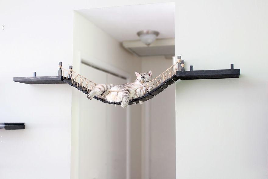 puente-de-Indiana-Jones-para-gatos
