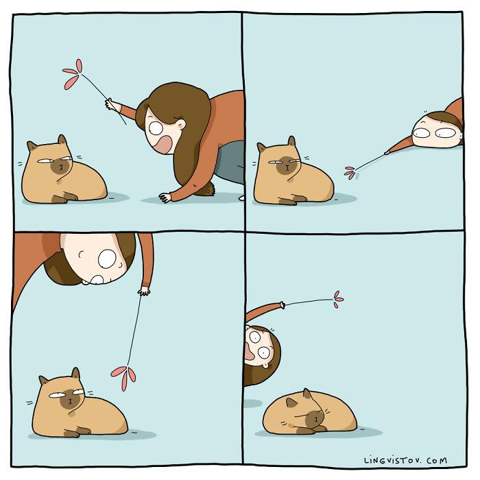 vida-gato