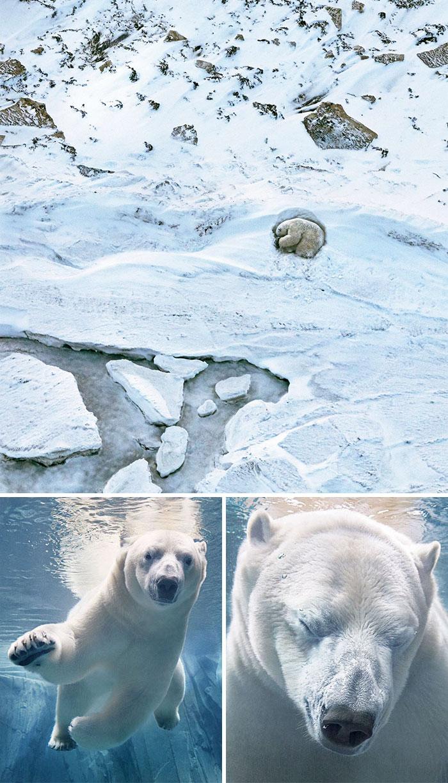 animal-extincion